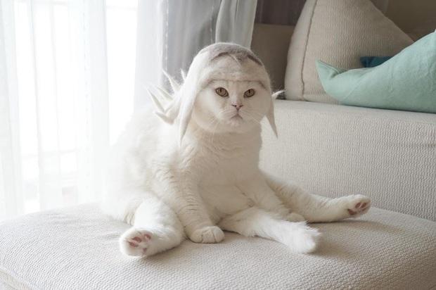 Chải ra cả tấn lông thừa, cặp vợ chồng hô biến chúng thành những chiếc mũ siêu đáng yêu cho mèo nhà mình - Ảnh 3.