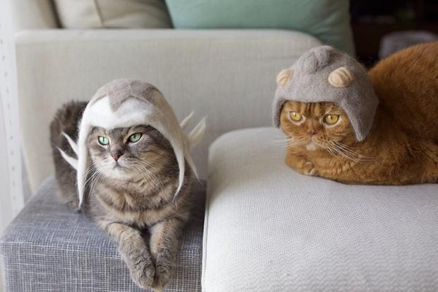 Chải ra cả tấn lông thừa, cặp vợ chồng hô biến chúng thành những chiếc mũ siêu đáng yêu cho mèo nhà mình - Ảnh 4.