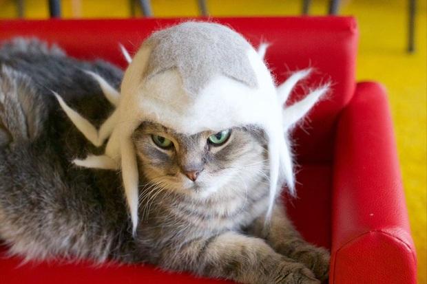 Chải ra cả tấn lông thừa, cặp vợ chồng hô biến chúng thành những chiếc mũ siêu đáng yêu cho mèo nhà mình - Ảnh 5.