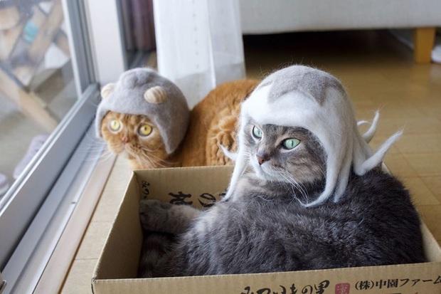 Chải ra cả tấn lông thừa, cặp vợ chồng hô biến chúng thành những chiếc mũ siêu đáng yêu cho mèo nhà mình - Ảnh 6.