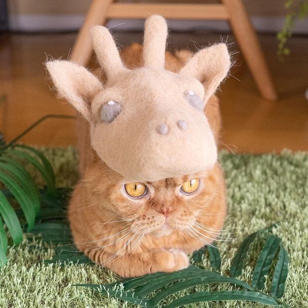 Chải ra cả tấn lông thừa, cặp vợ chồng hô biến chúng thành những chiếc mũ siêu đáng yêu cho mèo nhà mình - Ảnh 7.