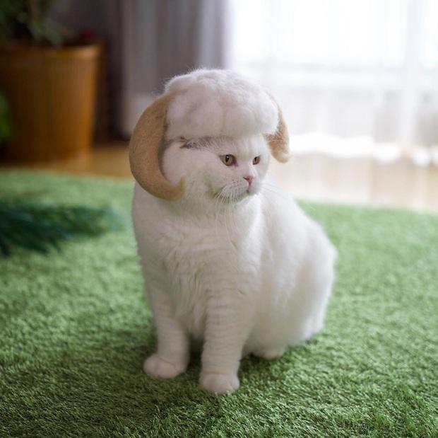 Chải ra cả tấn lông thừa, cặp vợ chồng hô biến chúng thành những chiếc mũ siêu đáng yêu cho mèo nhà mình - Ảnh 8.
