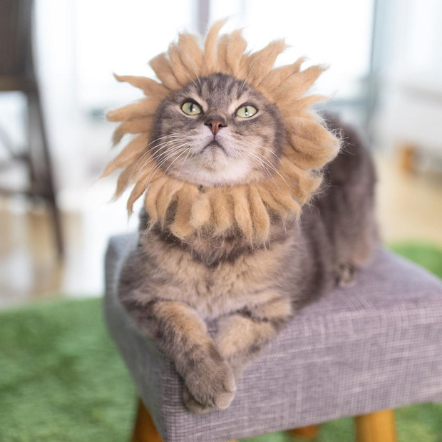 Chải ra cả tấn lông thừa, cặp vợ chồng hô biến chúng thành những chiếc mũ siêu đáng yêu cho mèo nhà mình - Ảnh 9.