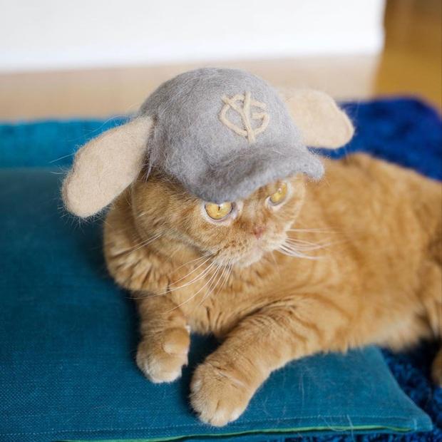 Chải ra cả tấn lông thừa, cặp vợ chồng hô biến chúng thành những chiếc mũ siêu đáng yêu cho mèo nhà mình - Ảnh 11.