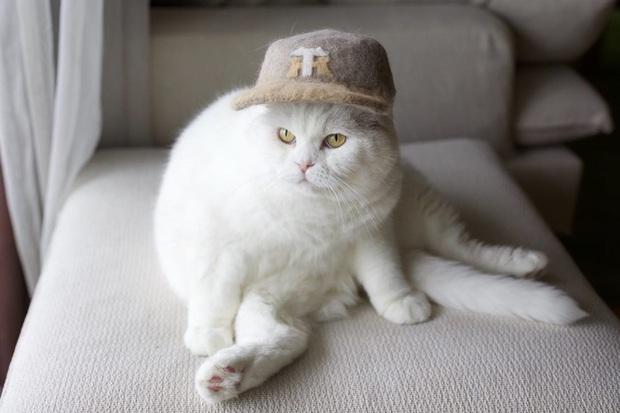 Chải ra cả tấn lông thừa, cặp vợ chồng hô biến chúng thành những chiếc mũ siêu đáng yêu cho mèo nhà mình - Ảnh 12.