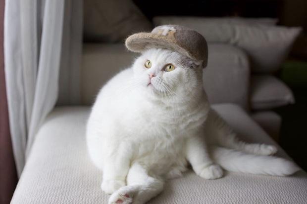 Chải ra cả tấn lông thừa, cặp vợ chồng hô biến chúng thành những chiếc mũ siêu đáng yêu cho mèo nhà mình - Ảnh 13.