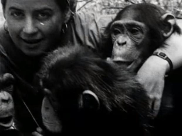 Chuyện về Lucy - Cô tinh tinh được nuôi dạy như con người: Khi khoa học bỗng trở nên vô trách nhiệm và để lại một sinh vật cô đơn bậc nhất lịch sử - Ảnh 5.