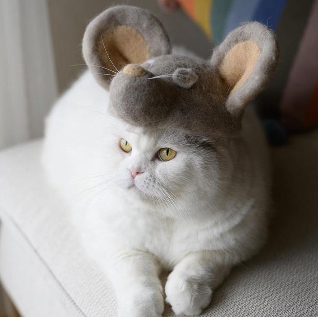 Chải ra cả tấn lông thừa, cặp vợ chồng hô biến chúng thành những chiếc mũ siêu đáng yêu cho mèo nhà mình - Ảnh 14.