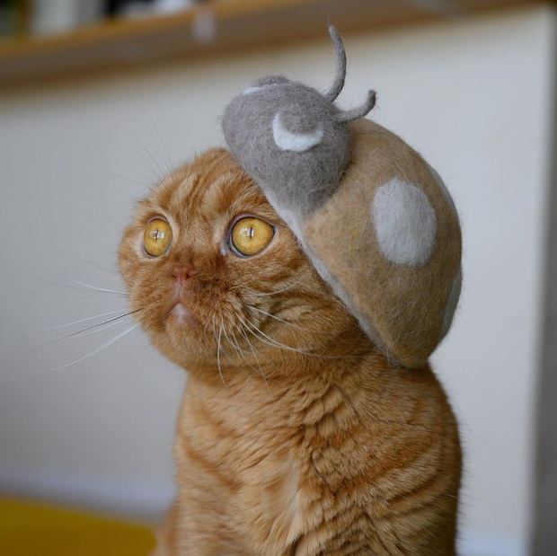 Chải ra cả tấn lông thừa, cặp vợ chồng hô biến chúng thành những chiếc mũ siêu đáng yêu cho mèo nhà mình - Ảnh 15.