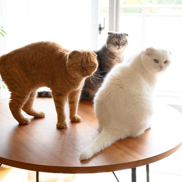 Chải ra cả tấn lông thừa, cặp vợ chồng hô biến chúng thành những chiếc mũ siêu đáng yêu cho mèo nhà mình - Ảnh 1.