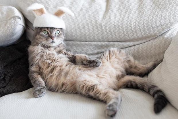 Chải ra cả tấn lông thừa, cặp vợ chồng hô biến chúng thành những chiếc mũ siêu đáng yêu cho mèo nhà mình - Ảnh 16.