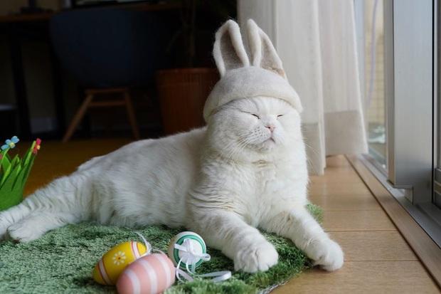Chải ra cả tấn lông thừa, cặp vợ chồng hô biến chúng thành những chiếc mũ siêu đáng yêu cho mèo nhà mình - Ảnh 17.