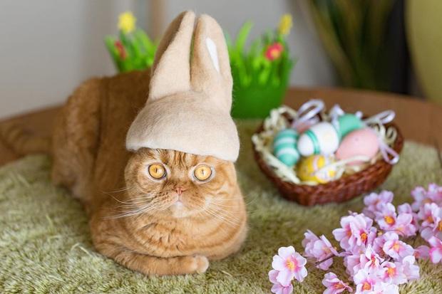 Chải ra cả tấn lông thừa, cặp vợ chồng hô biến chúng thành những chiếc mũ siêu đáng yêu cho mèo nhà mình - Ảnh 18.