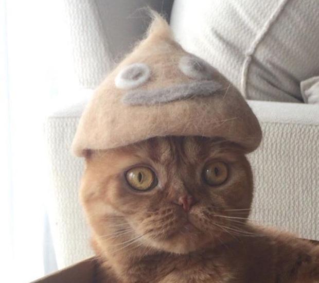 Chải ra cả tấn lông thừa, cặp vợ chồng hô biến chúng thành những chiếc mũ siêu đáng yêu cho mèo nhà mình - Ảnh 19.