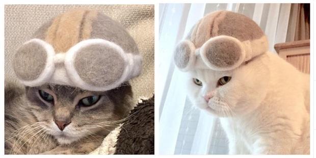Chải ra cả tấn lông thừa, cặp vợ chồng hô biến chúng thành những chiếc mũ siêu đáng yêu cho mèo nhà mình - Ảnh 10.