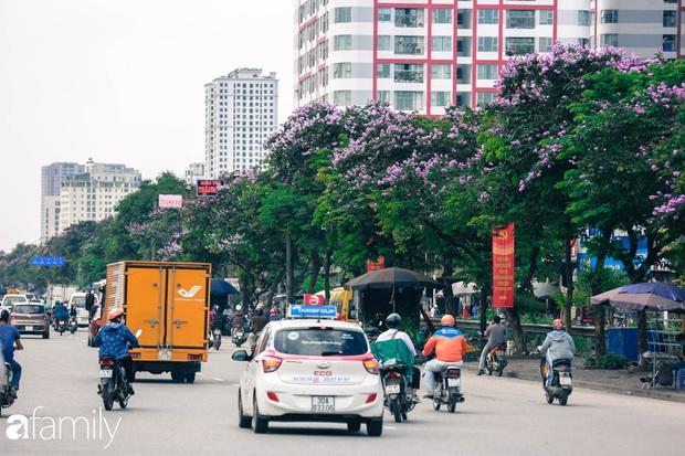 Trở lại cuộc sống bộn bề như trước, có mấy ai nhận ra Hà Nội đang trong một mùa hoa bằng lăng đẹp tuyệt vời - Ảnh 6.