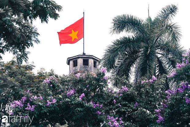 Trở lại cuộc sống bộn bề như trước, có mấy ai nhận ra Hà Nội đang trong một mùa hoa bằng lăng đẹp tuyệt vời - Ảnh 7.