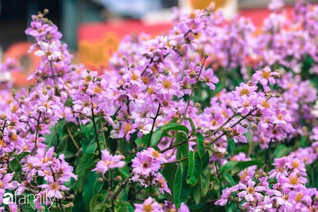 Trở lại cuộc sống bộn bề như trước, có mấy ai nhận ra Hà Nội đang trong một mùa hoa bằng lăng đẹp tuyệt vời - Ảnh 11.