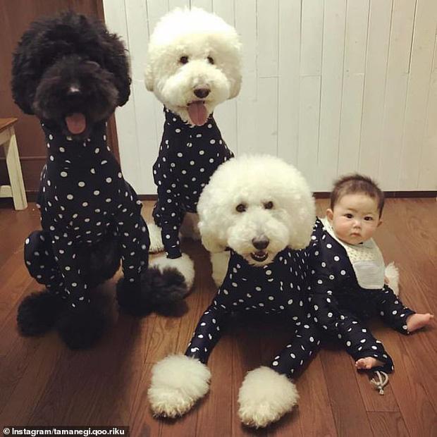 Chỉ ở nhà chăm sóc cháu và chơi với chó, bà ngoại vẫn thu hút hơn 560 nghìn người theo dõi trên MXH nhờ những hình ảnh quá sức dễ thương - Ảnh 4.