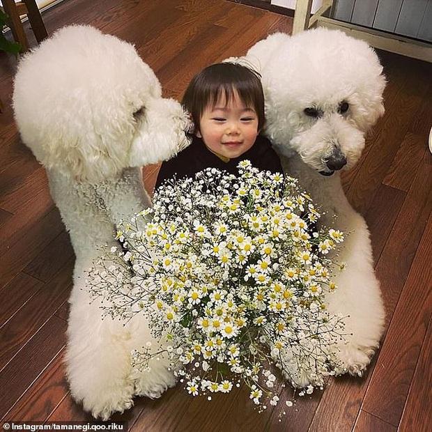 Chỉ ở nhà chăm sóc cháu và chơi với chó, bà ngoại vẫn thu hút hơn 560 nghìn người theo dõi trên MXH nhờ những hình ảnh quá sức dễ thương - Ảnh 10.