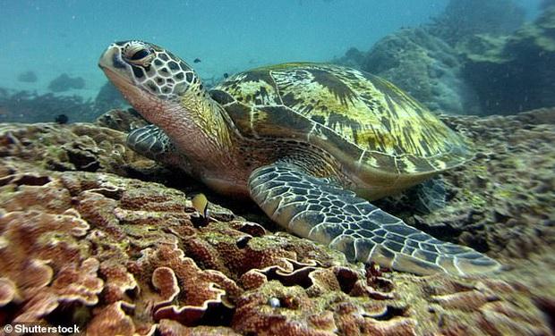Thấy rùa biển đi lại khó khăn sau khi dạt bờ, khoa học tìm hiểu để rồi nhận ra sự thật: Lại thêm một bi kịch nữa chỉ vì loài người - Ảnh 3.