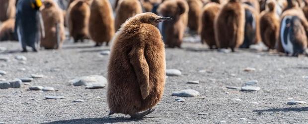 Hít phải quá nhiều... phân chim cánh cụt, giới khoa học Nam Cực đang có phản ứng rất lạ và lý do phía sau khiến ai cũng phải bật cười - Ảnh 1.