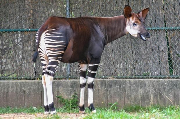 Vẻ đẹp của 24 loài động vật mới được đưa vào sách đỏ, có thể chúng ta sẽ không còn nhìn thấy chúng trong tương lai - Ảnh 2.