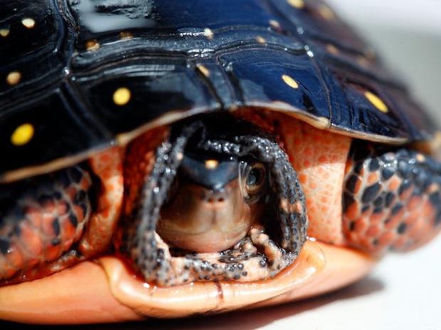 Vẻ đẹp của 24 loài động vật mới được đưa vào sách đỏ, có thể chúng ta sẽ không còn nhìn thấy chúng trong tương lai - Ảnh 21.