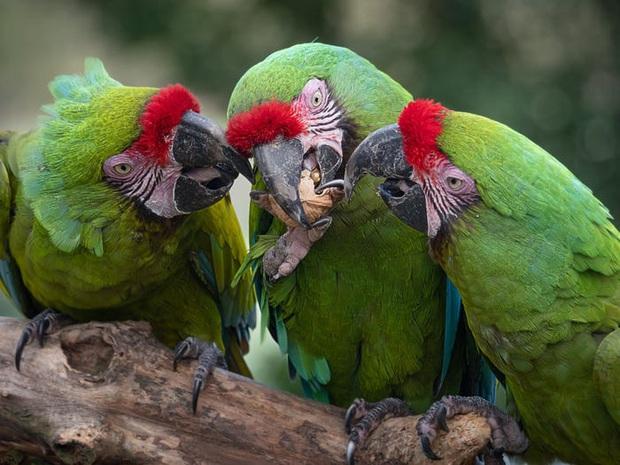 Vẻ đẹp của 24 loài động vật mới được đưa vào sách đỏ, có thể chúng ta sẽ không còn nhìn thấy chúng trong tương lai - Ảnh 23.