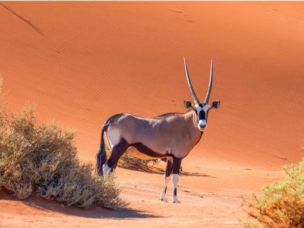 Vẻ đẹp của 24 loài động vật mới được đưa vào sách đỏ, có thể chúng ta sẽ không còn nhìn thấy chúng trong tương lai - Ảnh 6.