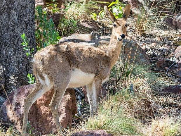 Vẻ đẹp của 24 loài động vật mới được đưa vào sách đỏ, có thể chúng ta sẽ không còn nhìn thấy chúng trong tương lai - Ảnh 7.