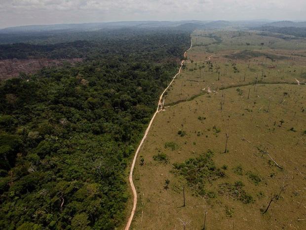Cảnh báo đáng sợ: Sau khi hết Covid-19, rừng Amazon sẽ là nguồn lây nhiễm virus corona kế tiếp và lỗi hoàn toàn nằm ở con người - Ảnh 1.