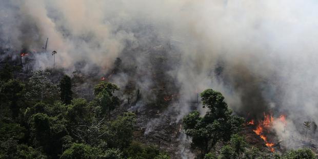 Cảnh báo đáng sợ: Sau khi hết Covid-19, rừng Amazon sẽ là nguồn lây nhiễm virus corona kế tiếp và lỗi hoàn toàn nằm ở con người - Ảnh 2.