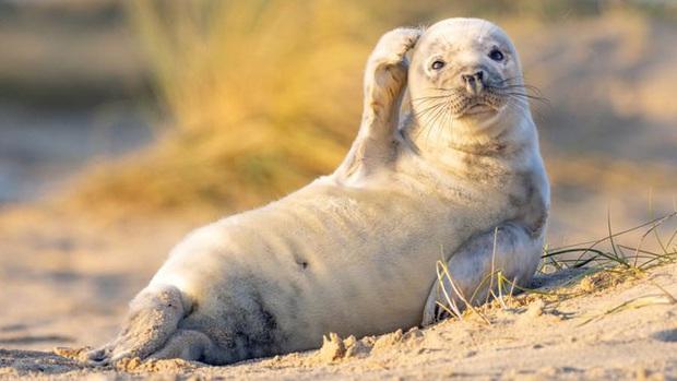 10 bức ảnh có thể giành giải Ảnh động vật hoang dã hài hước 2020 - Ảnh 1.