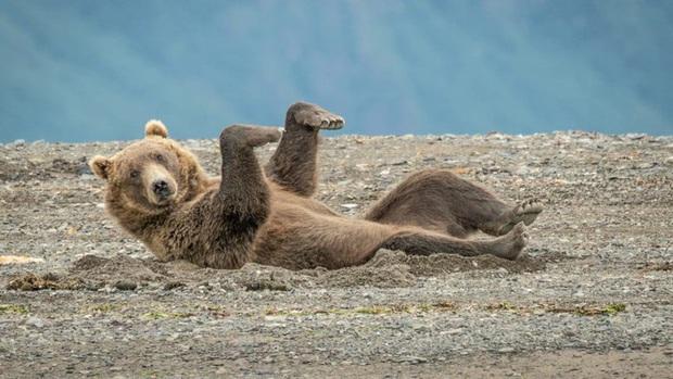 10 bức ảnh có thể giành giải Ảnh động vật hoang dã hài hước 2020 - Ảnh 2.