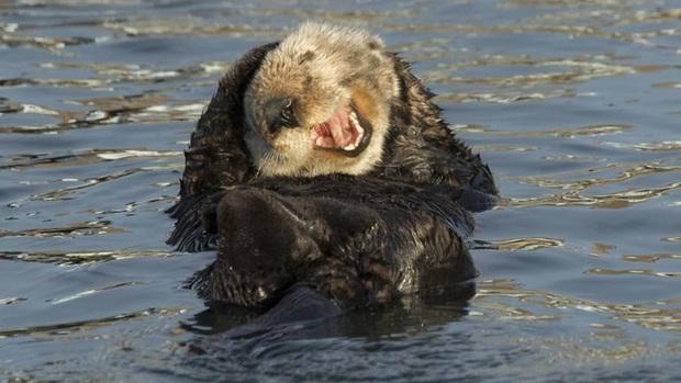 10 bức ảnh có thể giành giải Ảnh động vật hoang dã hài hước 2020 - Ảnh 10.