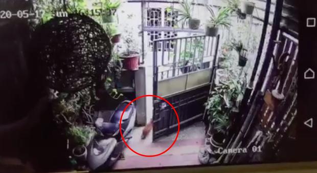 Chú chó Poodle chạy ra cổng rồi bị cô gái lạ mặt bế mất, chủ nhân khóc ròng nhờ cộng đồng mạng giúp tìm lại cún cưng - Ảnh 4.