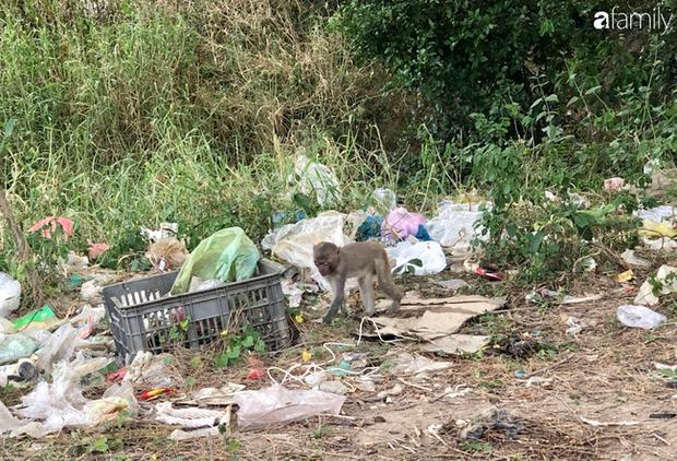 Bầy khỉ mình đầy thương tích sống lay lắt ở bán đảo Sơn Trà bây giờ ra sao? - Ảnh 8.