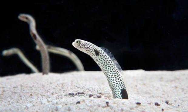 Sợ đàn lươn quên hết mặt người, thủy cung ở Nhật Bản tuyển tình nguyện viên gọi Facetime với chúng - Ảnh 3.