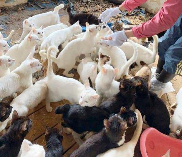 Một gia đình Nhật Bản bị khởi tố vì... nuôi 238 con mèo - Ảnh 1.