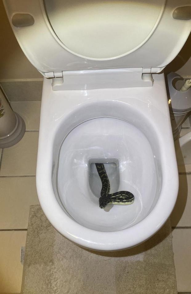 Mắt nhắm mắt mở dậy đi vệ sinh, người phụ nữ được phen hú vía khi diện kiến bé Na chui ra từ bồn cầu - Ảnh 1.