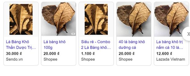 Chuyện thật như đùa, lá bàng khô được rao bán rầm rộ, giá 1.000 đồng/lá - Ảnh 2.