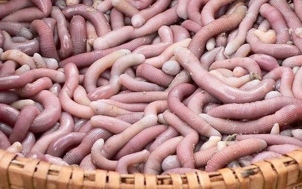 Những món hải sản ở Việt Nam tưởng quen thuộc lại được sách kỷ lục vinh danh, có loại mới nhìn thôi đã thấy rùng mình không dám ăn - Ảnh 1.