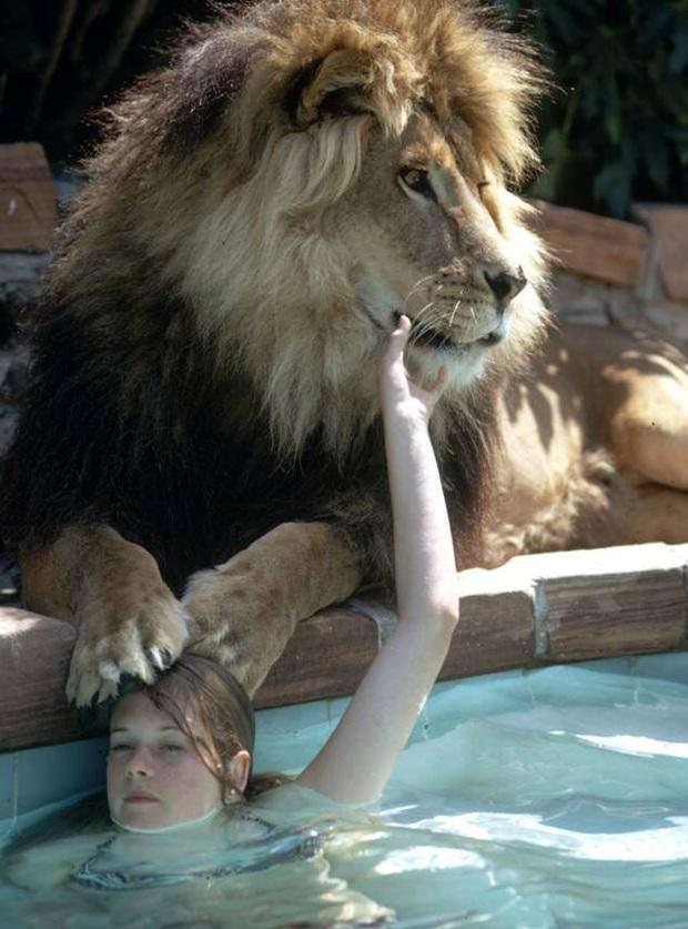 Bức ảnh con sư tử tấn công cô gái trẻ ngỡ là khoảnh khắc kinh hoàng cuối cùng của nạn nhân nhưng sự thật trái ngược hoàn toàn - Ảnh 4.
