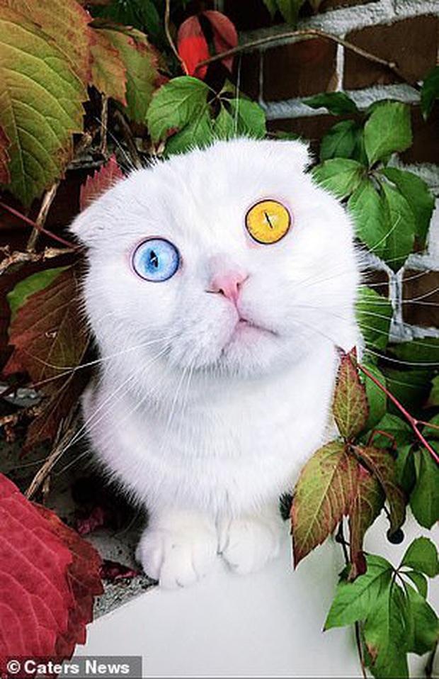 Sở hữu cặp mắt 2 màu đẹp khó tả, chú mèo vẫn bị hắt hủi vì vẻ ngoài khác lạ, phải tìm người cưu mang - Ảnh 3.