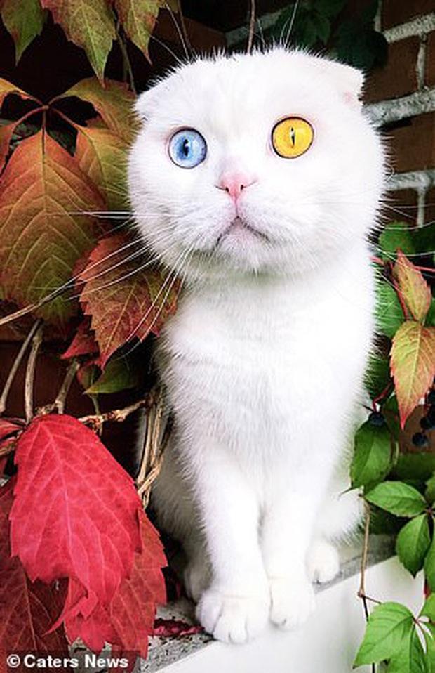Sở hữu cặp mắt 2 màu đẹp khó tả, chú mèo vẫn bị hắt hủi vì vẻ ngoài khác lạ, phải tìm người cưu mang - Ảnh 4.