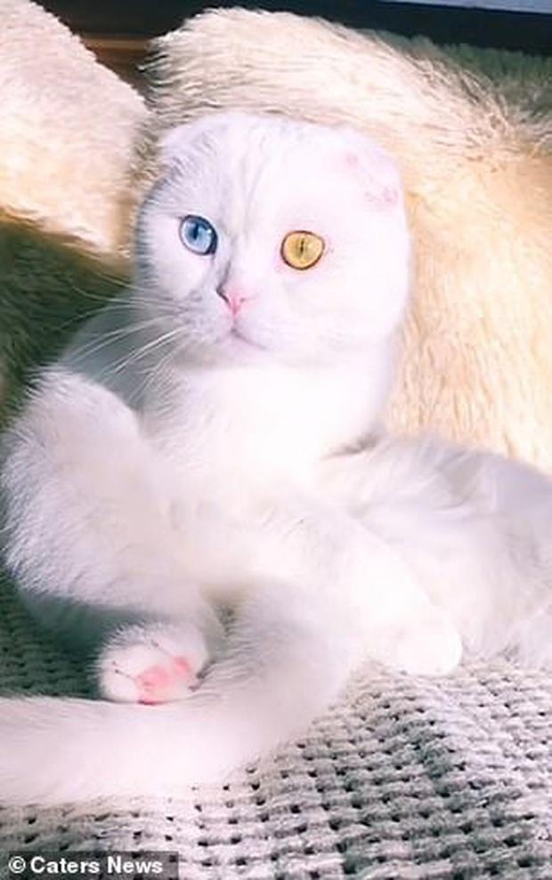 Sở hữu cặp mắt 2 màu đẹp khó tả, chú mèo vẫn bị hắt hủi vì vẻ ngoài khác lạ, phải tìm người cưu mang - Ảnh 5.