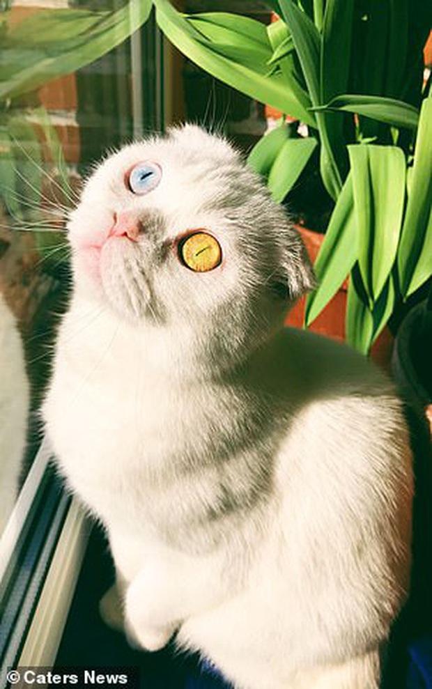 Sở hữu cặp mắt 2 màu đẹp khó tả, chú mèo vẫn bị hắt hủi vì vẻ ngoài khác lạ, phải tìm người cưu mang - Ảnh 6.