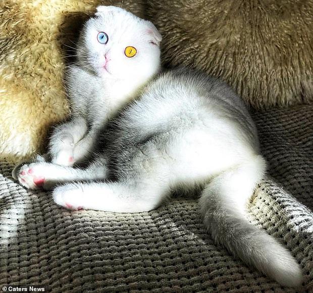 Sở hữu cặp mắt 2 màu đẹp khó tả, chú mèo vẫn bị hắt hủi vì vẻ ngoài khác lạ, phải tìm người cưu mang - Ảnh 7.