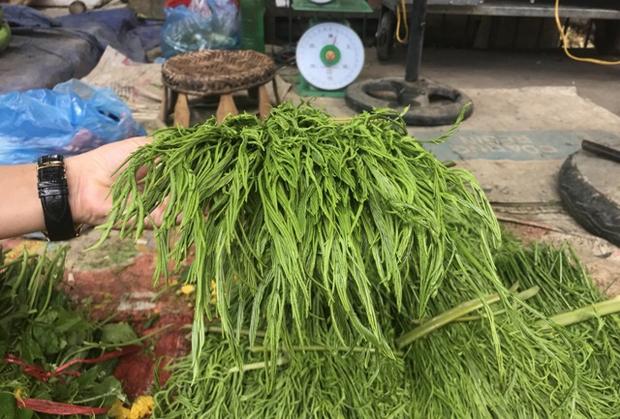 Vùng Tây Bắc có một loại rau đứng từ xa đã nghe mùi thối không chịu được, vậy mà ai cũng tranh nhau mua như 1 loại đặc sản - Ảnh 7.